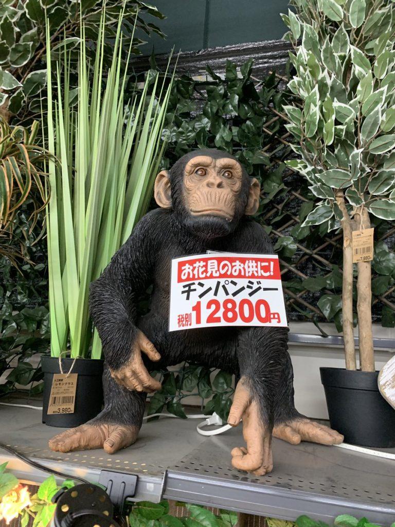お花見のお供用チンパンジー