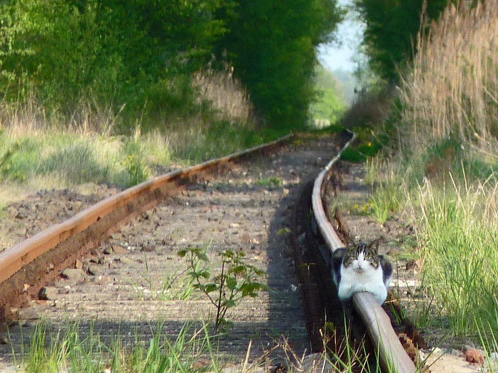 線路の上で佇むニャンコ