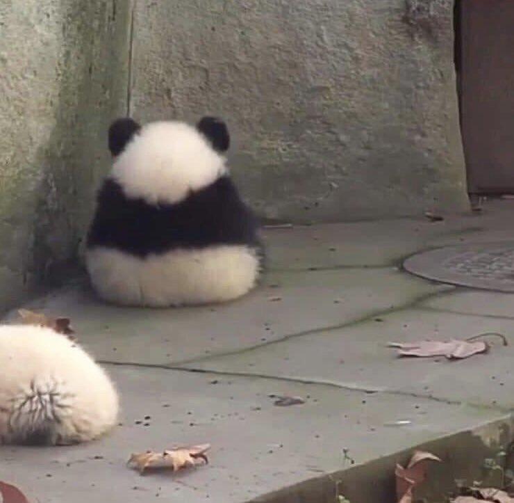 座ったパンダの後姿が おむすび そっくりだと話題に
